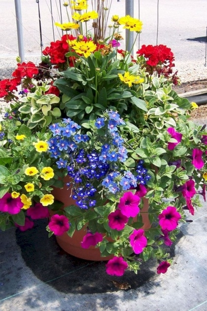 Inspirational Best Flowers For Planters Picture