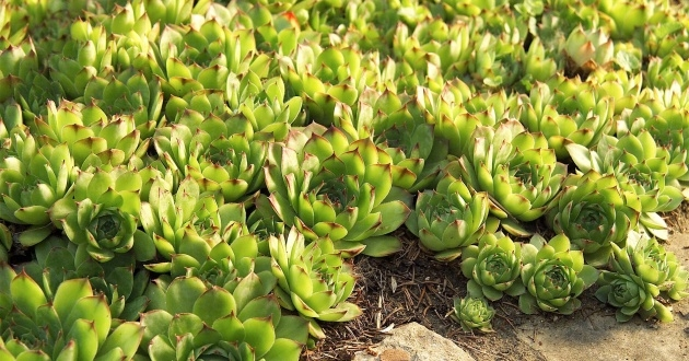 Inspirational Ground Cover Plants Photo