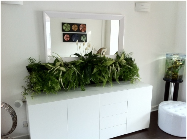 Inspirational Large Indoor Planters Photo