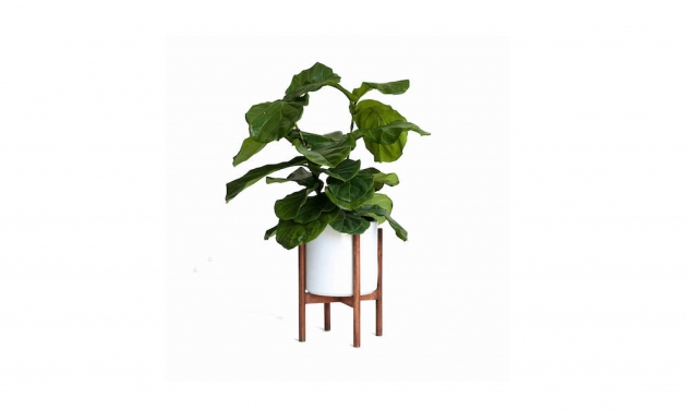 Inspirational Mid Century Modern Planter Picture