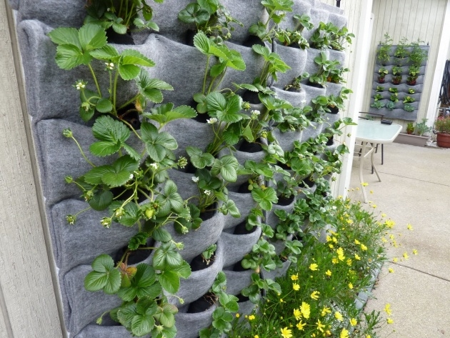 Inspirational Outdoor Living Wall Planters Picture