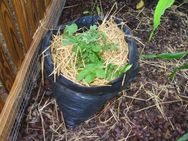 Inspirational Planting Potatoes In Bags Image