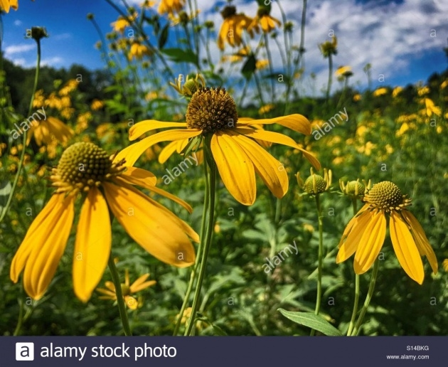 Inspirational Prairie Flowers For Wisconsin Image