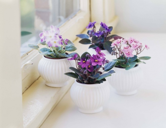 Inspirational Small Indoor Plants That Flower Image