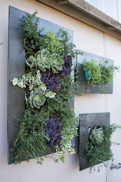 Inspirational Succulent Wall Planter Picture