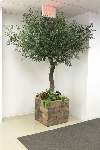 Inspirational Trees In Planters Photo