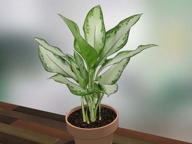 Inspiring Green House Plants Pictures Picture