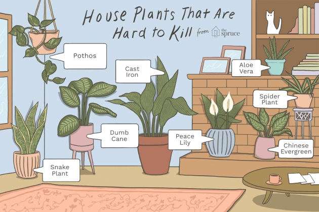 Inspiring Palm Houseplant Cant Support Itself Picture