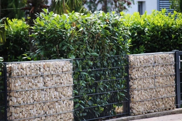 Inspiring Plant Fence Ideas Picture