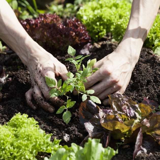 Inspiring Planting Plants Picture