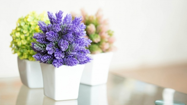 Inspiring Small Indoor Plants That Flower Picture