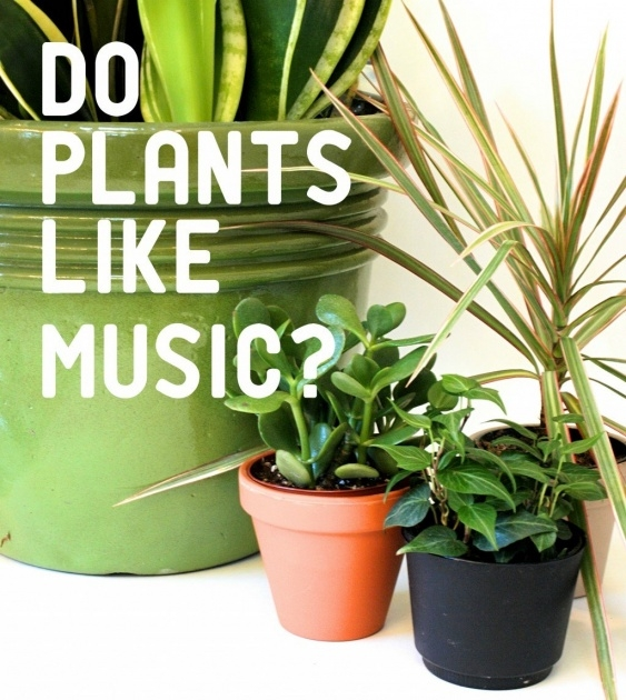 Marvelous Music And Plants Science Fair Project Results Picture