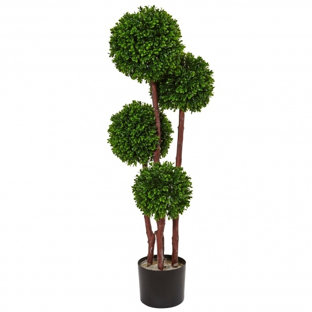 Marvelous Outdoor Topiary Plants Image