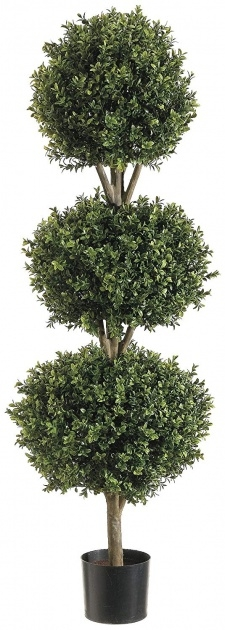 Marvelous Outdoor Topiary Plants Picture
