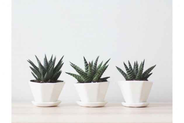 Most Creative Indoor Plants And Pots Image