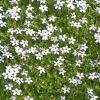 Low Ground Cover Plants