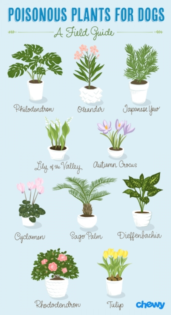 Most Creative Outdoor Plants Healthy For Dogs Photo