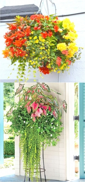 Most Creative Pictures Of Trailing Plants For A Hanging Basket Picture