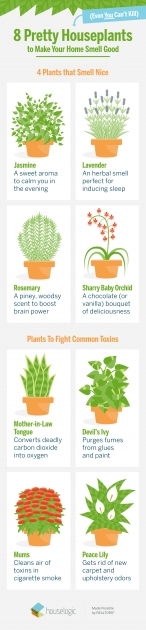 Most Creative Purifying Home Plants Photo