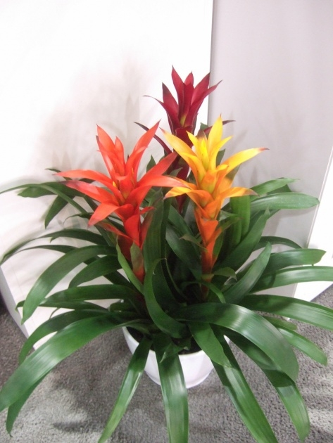 Most Creative Small Indoor Plants That Flower Picture