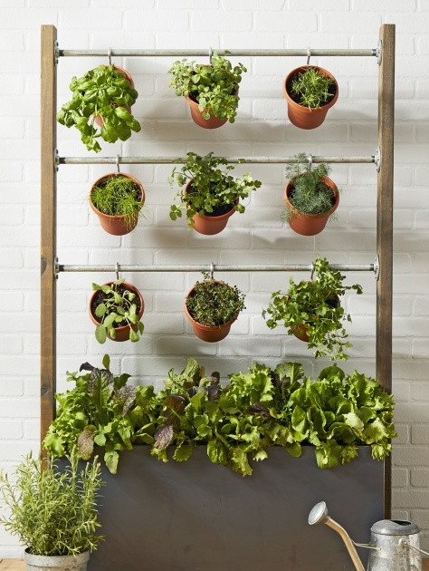 Most Creative Small Lattice For Potted Plants Photo