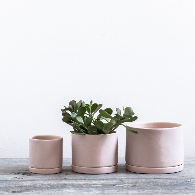 Most Creative Tabletop Planter Picture