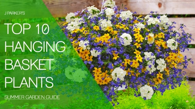 Most Creative Trailing Plants Or Hanging Baskets Image