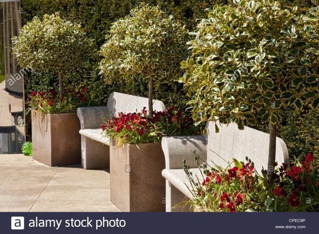 Most Creative Trees In Planters Picture