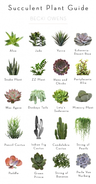 Most Creative Type Of House Plants Photo