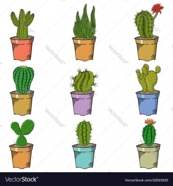 Most Creative Types Of Cactus Picture