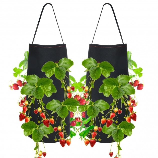Most Perfect Hanging Strawberry Planter Photo