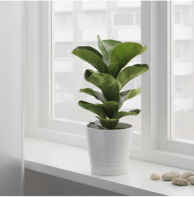 Most Perfect Large Leaf Tree For Indoors Image