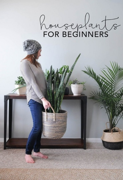 Most Perfect Modern Indoor House Plants Picture