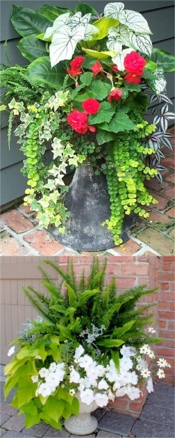 Most Perfect Plants For Planters In Shade Picture