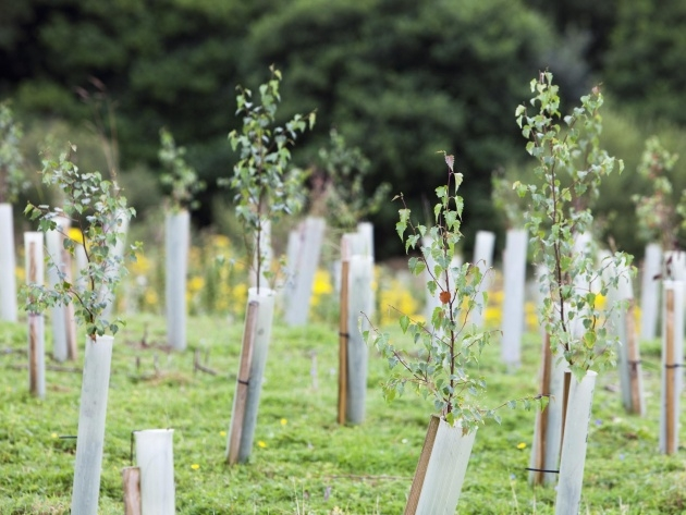 Most Perfect Tree Planting Uk Picture