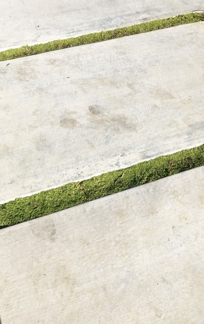 Most Popular Low Profile Ground Cover For Between Pavers Picture