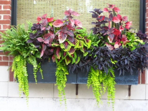 Most Popular Plants For Planter Boxes Photo