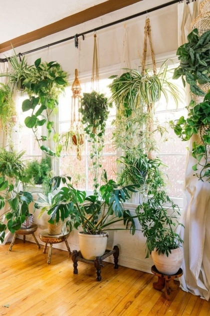 Most Popular Plants In Home Decor Picture