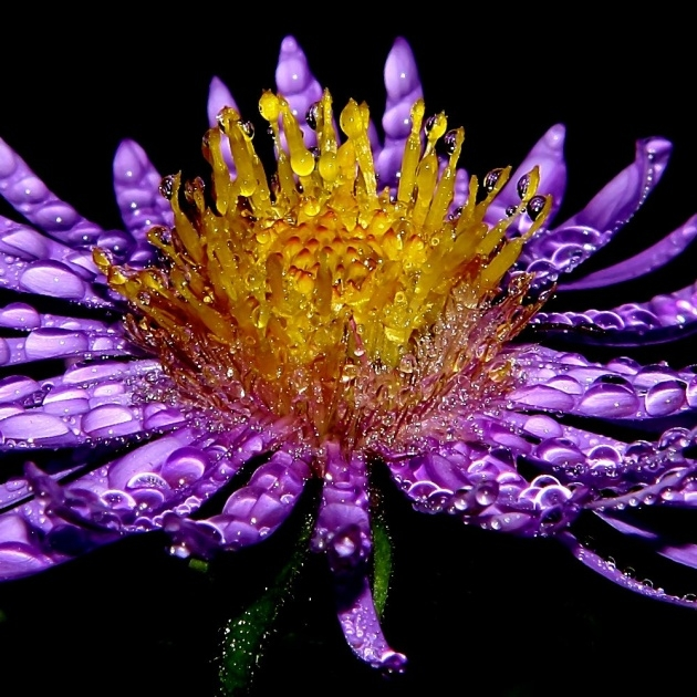 Outstanding Flowers Of The Rainforest Pictures Photo