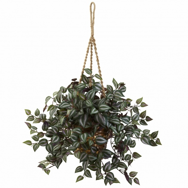 Outstanding Hanging Basket Foiliage Image