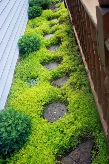 Outstanding Low Profile Ground Cover For Between Pavers Image