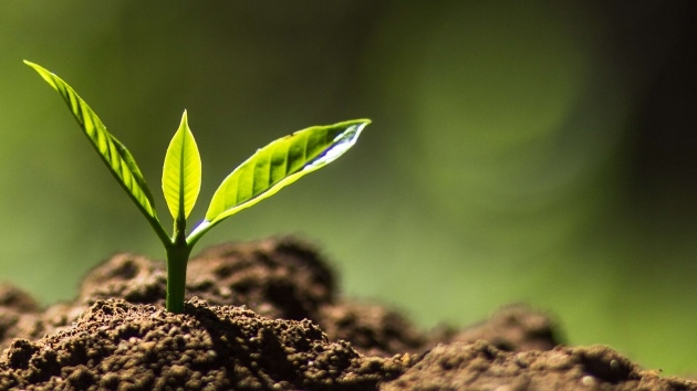 Outstanding Plant Soil Picture