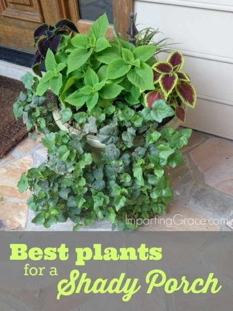 Outstanding Plants For Planters In Shade Image