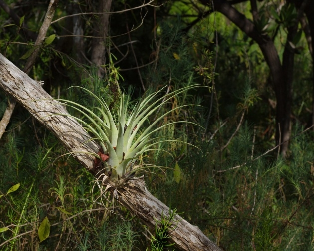 Outstanding Plants In The Everglades Facts Picture