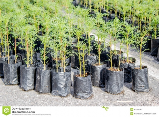 Outstanding Plastic Bag For Plants Picture