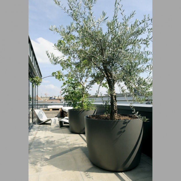Outstanding Trees In Planters Picture