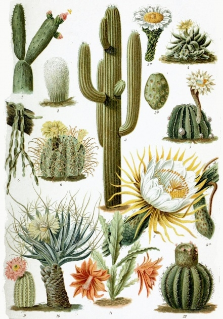 Outstanding Types Of Cactus Picture