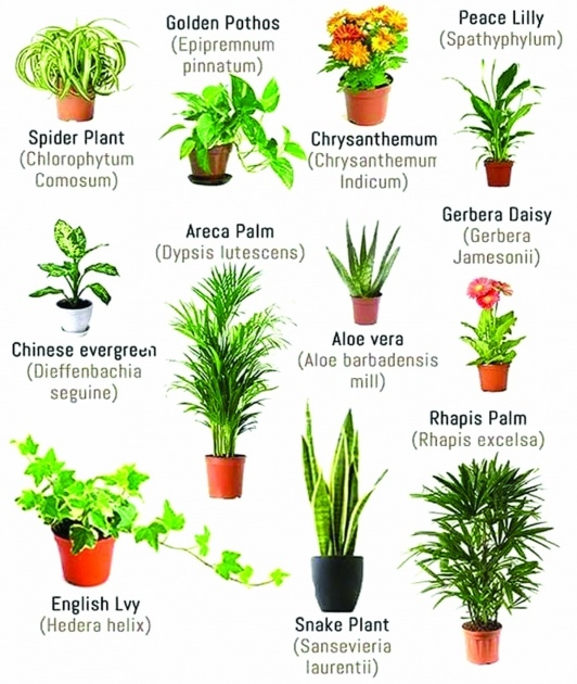Perfect Air Purifier Plant Indoor Picture
