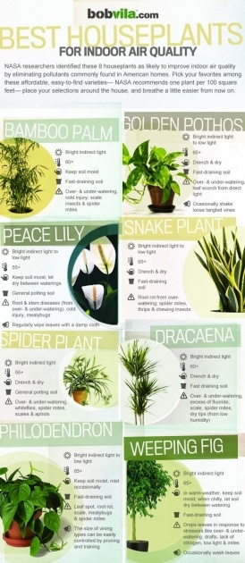 Perfect Air Purifying Indoor Plants Photo