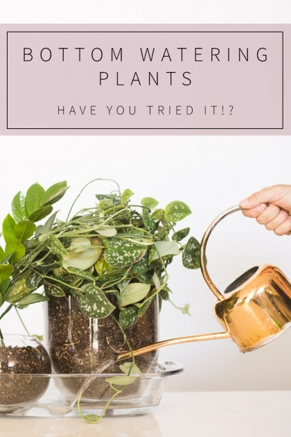 Perfect Bottom Watering Plants Picture